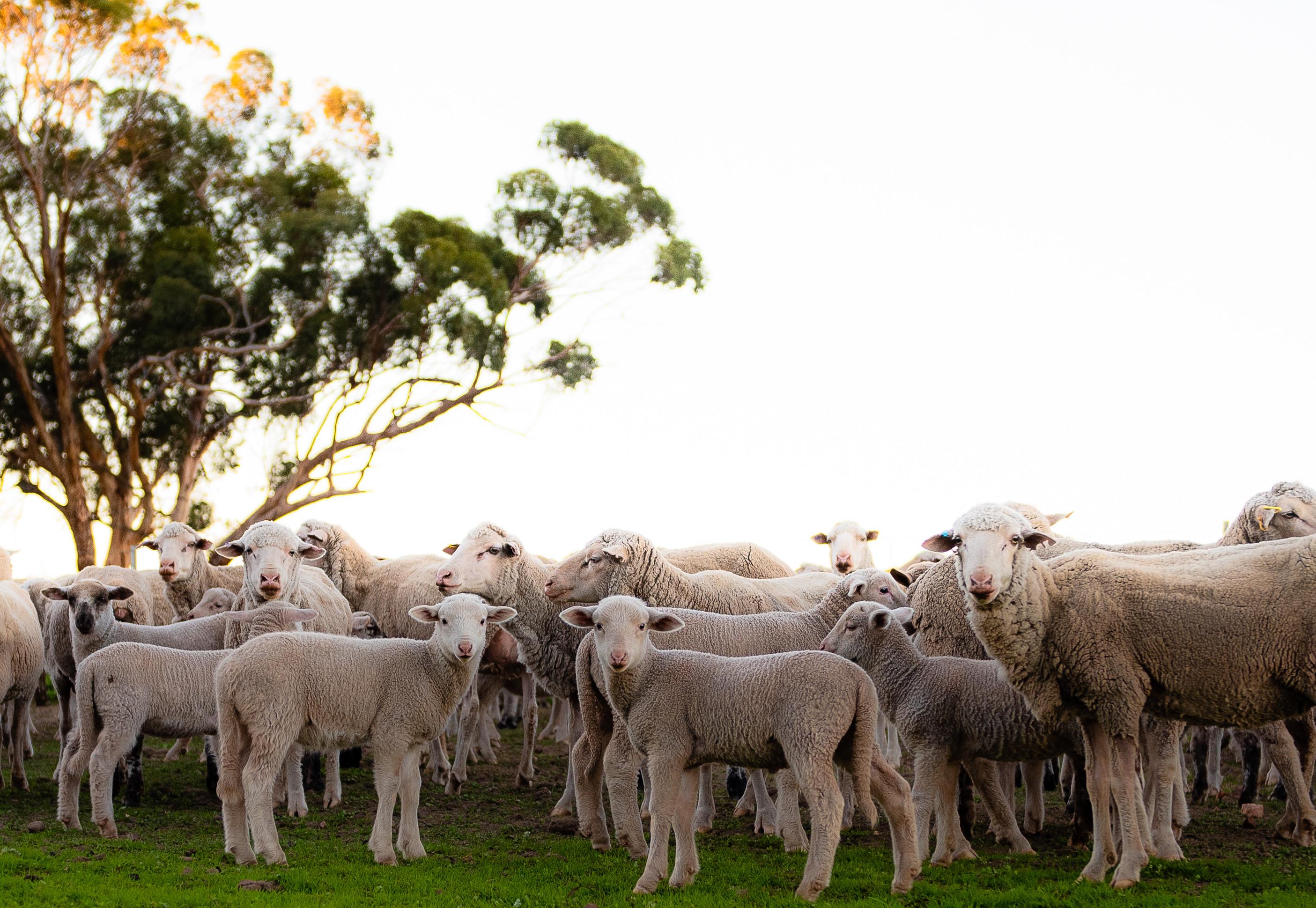 web wool week