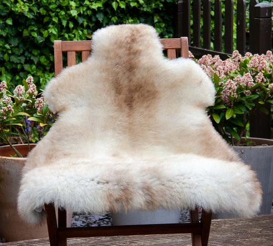 FB cappuccino chair
