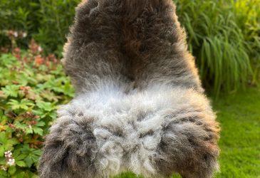FB wolfie woolly chair
