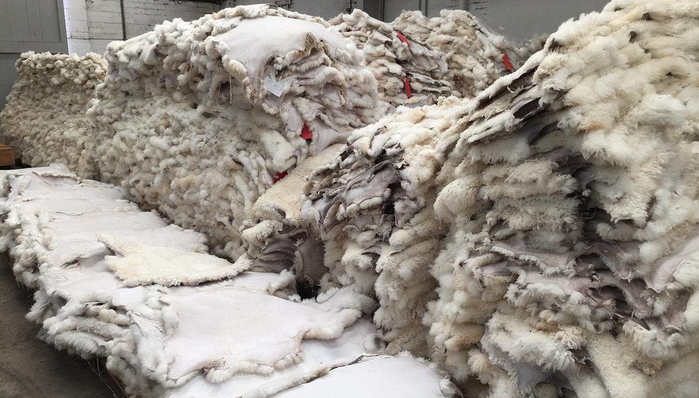 sheepskin sustainable